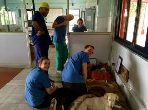 "The ""recovery bed"", where we placed dogs after surgery"