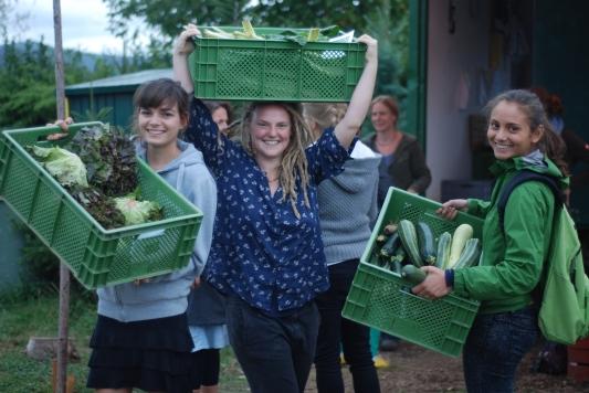 Freshly harvested veggies!