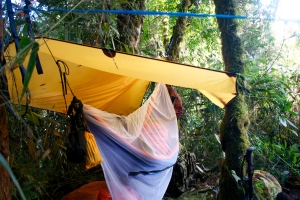 Hammocks make for a cosy nest away from the deadly insects.