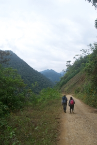 The never ending road back to camp after a long day searching for seedlings