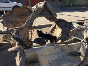 During natural disasters such as floods law enforcement can be difficult and crimes such as theft and unlawful possession can rise. This vehicle from the wreckage of the flood and mudslide attracts a cute but terratorial canine squatter.