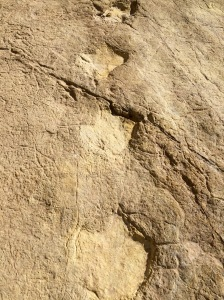 dinosaur footprints at praia de salema