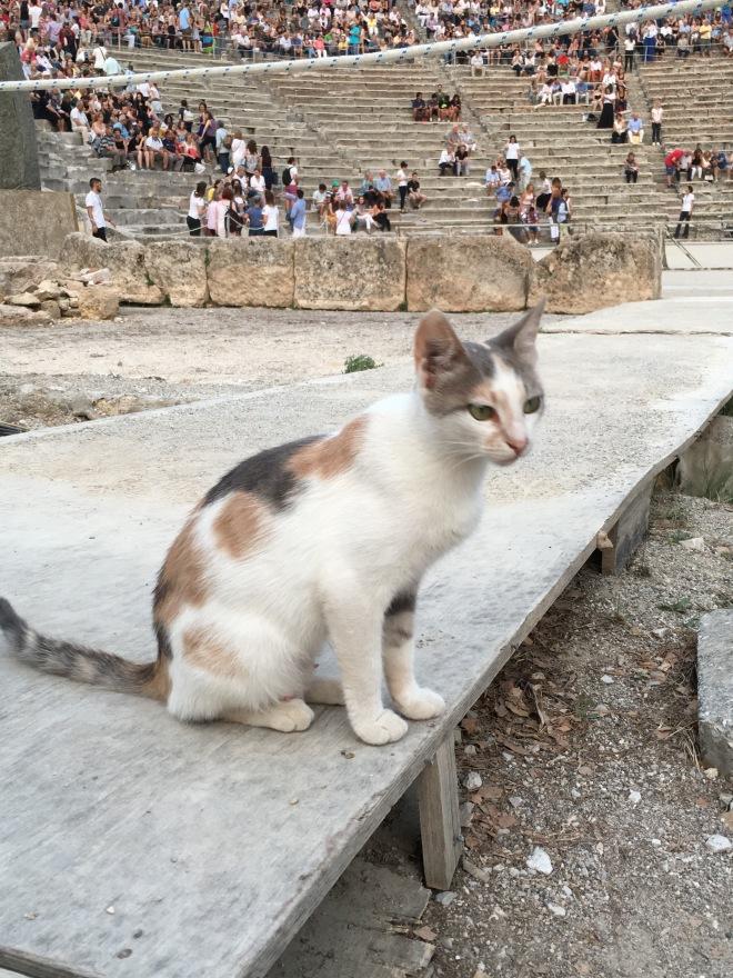 Epidaurus Theatre Cat